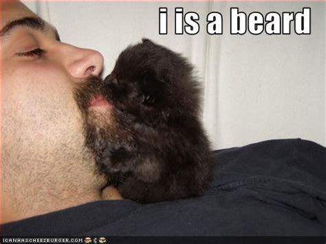 Cat Beard Meme - i just beat god of war iii and now everyone in my house