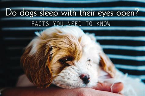 why do dogs always want food why do dogs sleep with their eyes open facts you need to
