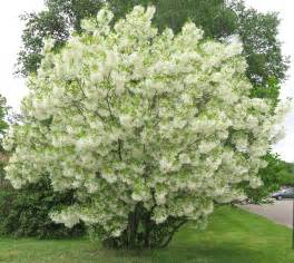 fafardsmall trees fit for yard garden fafard