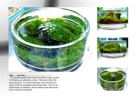 aquascapes hawaii home fish and tanks on pinterest aquarium reef