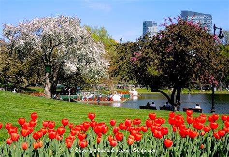 restaurants near swan boats boston top 10 boston attractions boston discovery guide