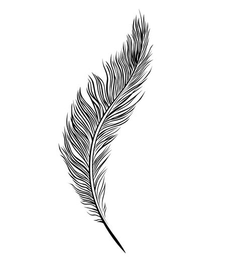 line drawing tattoos feather line drawing gd153 morgue file