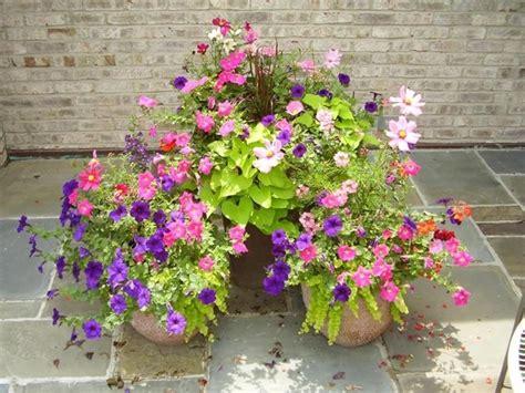 vaso da fiori fiori da vaso piante appartamento variet 224 fiori