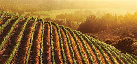 California Wines