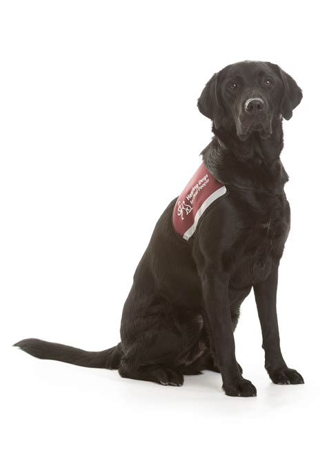 hearing dogs hearing dogs for deaf