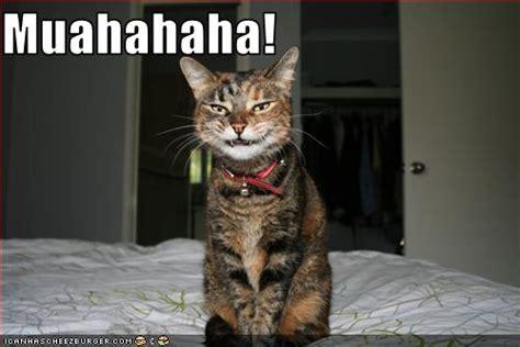 Laughing Cat Meme - derek landy blogs under duress april 2013
