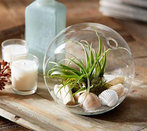 live plant office terrarium mini indoor desk garden live tabletop air plant garden pottery barn