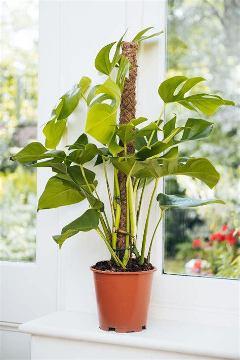 trendiest house plants