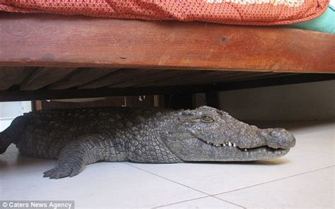 0007586779 the crocodile under the bed there is a crocodile under my bed call of africa safaris