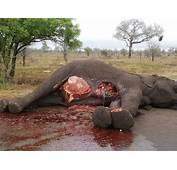 Storm Erupts Over Dead Elephant  Lowvelder