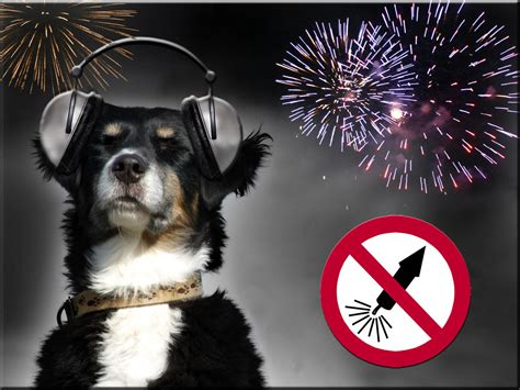 dogs and fireworks new year s how can we help our dogs bavarian times