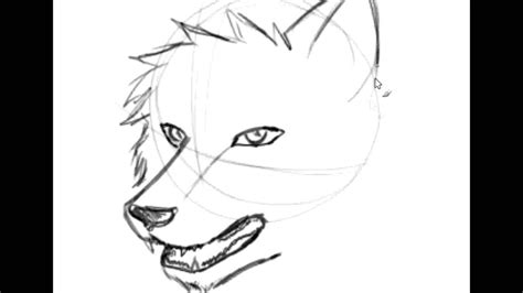 anime wolf drawings easy easy wolf drawings how to draw wolf easy