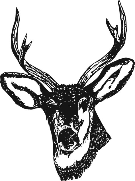 buck stag free vector graphic deer stag venison buck antlers