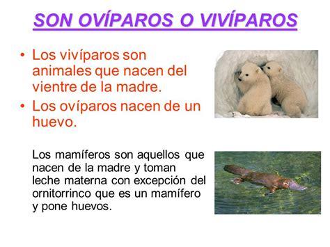 imagenes de animales que nacen del huevo imagenes de animales que nacen del huevo mam 205 feros
