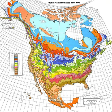 growing zone map understanding world hardiness zones plant hardiness zones in other regions