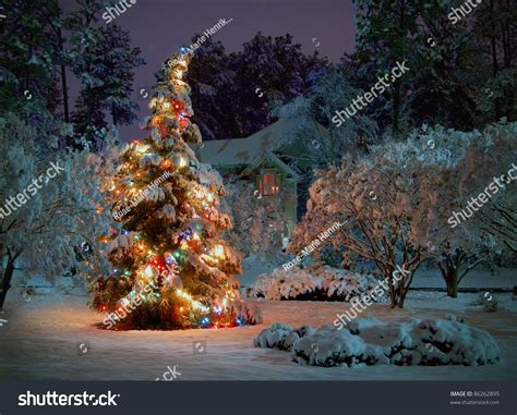 tree with snow and lights snow covered outdoor tree multicolored stock
