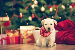 pet holiday gift guide 2015 ny daily news
