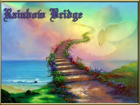 2219 best rainbow bridge images on quote 17 best ideas about heaven on quotes