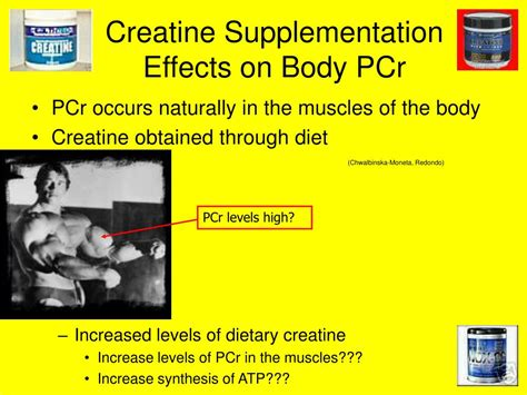 creatine effects creatine effects on www imgkid the image kid