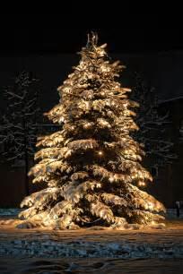 weihnachtsbaum im schnee flickr photo sharing