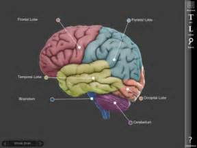 3d brain a model of the human brain ipad apps for