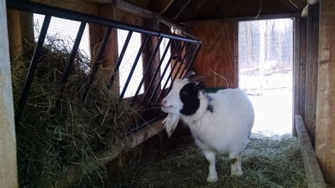 futon hay feeder a futon hay feeder animals forums