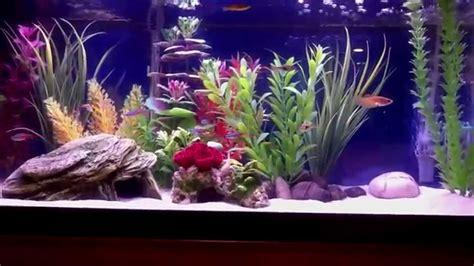 gallon freshwater aquarium youtube