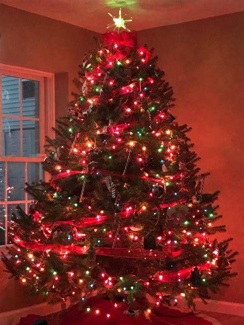 pike nursery christmas trees pike vue nursery tree farm home