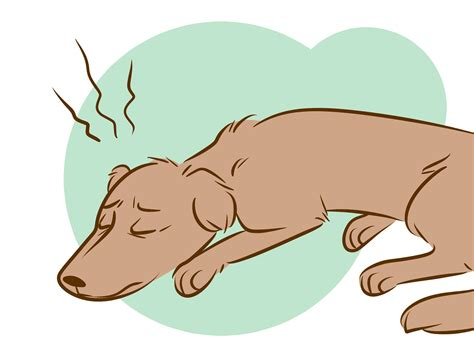 how to make a dying dog comfortable how to recognize a dying dog with pictures wikihow