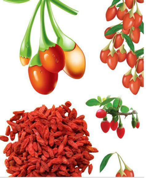 Cara Makan Goji Berry goji berry 233 tudo de bom