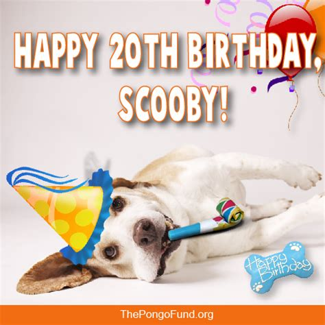 20th Birthday Meme - happy 20th birthday scooby the pongo fund