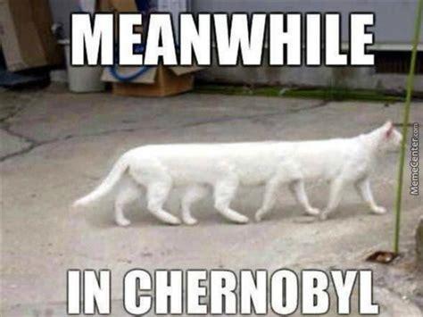 Meanwhile Meme - cat memes lemoncloud