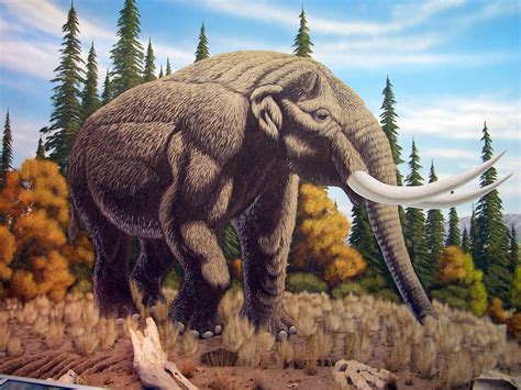 mastodon wallpaper  hd backgrounds images pictures