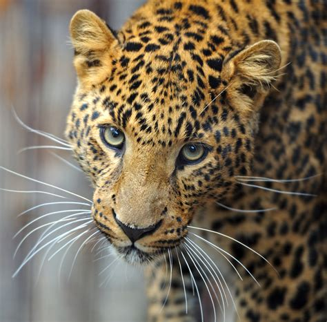 what color is a jaguar all are not created equal discovery eye foundation