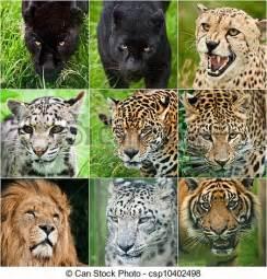 Tiger Cheetah Leopard Jaguar Panther Stock Fotografien Kompilation Portr 228 Ts Alles Gro 223