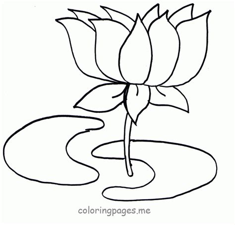 coloring pages of lotus flowers lotus flower coloring page coloring home