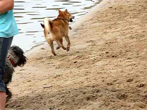 katze pinkelt plötzlich auf teppich saqib pinkelt sand funnydog tv