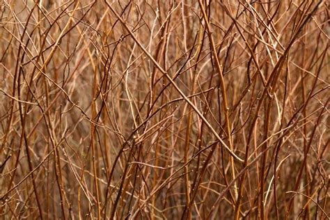 brown pattern images brown branches pattern free stock photo public domain