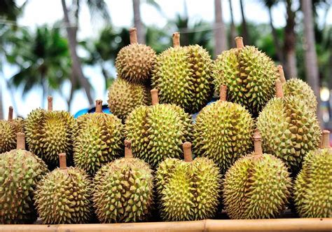 durian  king  stink  photo video indoneo