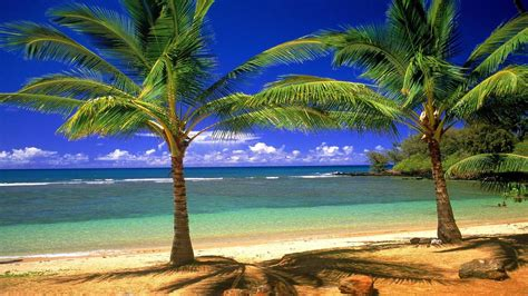 palm tree wallpaper palm tree beach wallpapers wallpaper cave