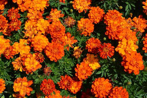 Arbuste A Fleur 762 by Arbuste A Fleur Orange Maison Design Apsip