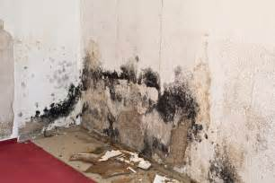 mold in homes is mold inside a home bad for your health