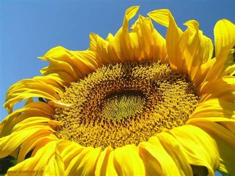 foto fiore foto fiori gratis per sfondi desktop