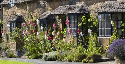 cottage garden seeds uk how to grow hollyhocks for some cottage garden colour
