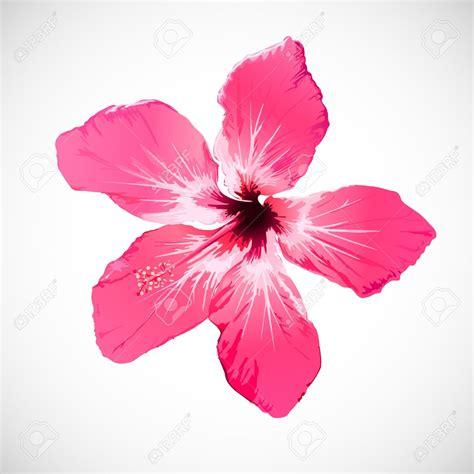fiore flowers hibiscus flower 101 clip