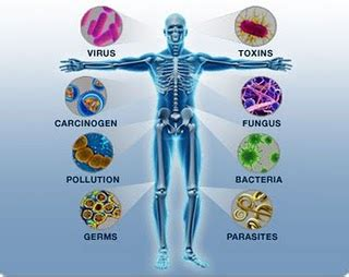 immune how your defends and protects you bloomsbury sigma books how can you protect and boost your immune system health
