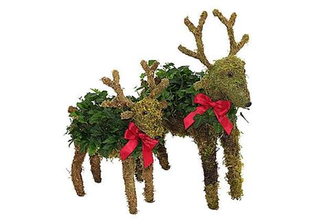topiary reindeer 33 best images about garden on a stick topiaries on