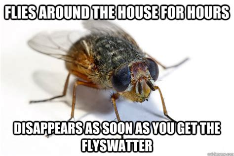 Fly Meme - flies around the house for hours disappears as soon as you