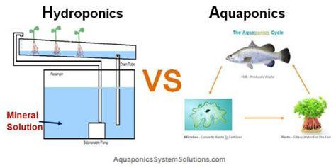 Fish Tank Bed Hydroponics Vs Aquaponics
