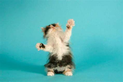 lustige katzenbilder mit witzigen spruechen die tierexperten
